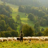 Tajemnica ludzkiego serca. Część 9. Dobry Pasterz i Judasz